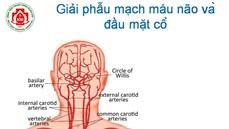 Giải phẫu mạch máu não ...